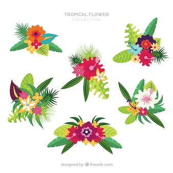 Ensemble de belles fleurs tropicales