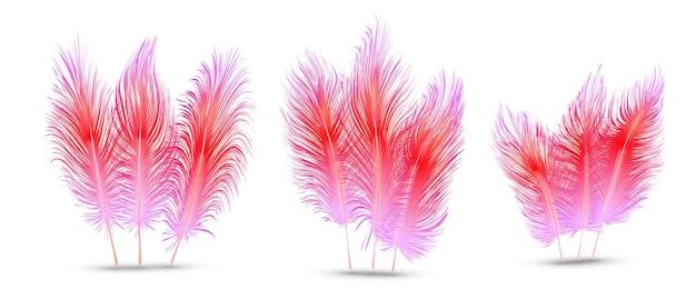 Ensemble de belles plumes festives isolé sur fond blanc