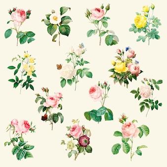 Ensemble de belles roses en fleurs