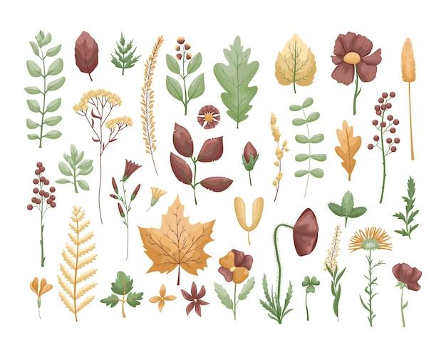 Ensemble botanique avec feuilles et fleurs d'herbier.