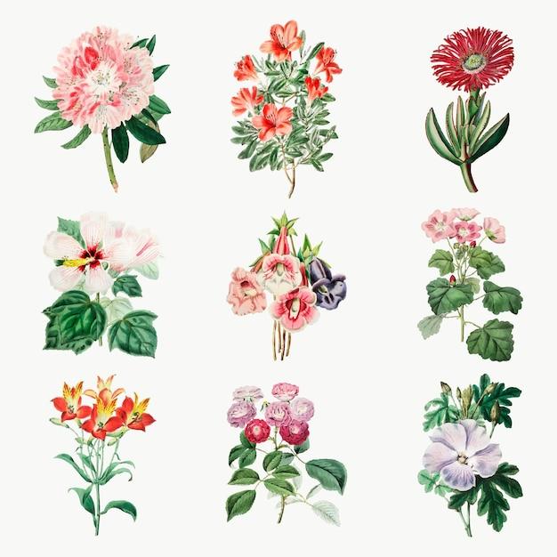 Ensemble botanique vintage de dessin à la main de fleurs