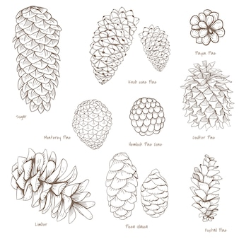 Ensemble botanique
