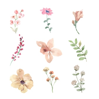 Ensemble de bouton floral aquarelle, illustration dessinée à la main