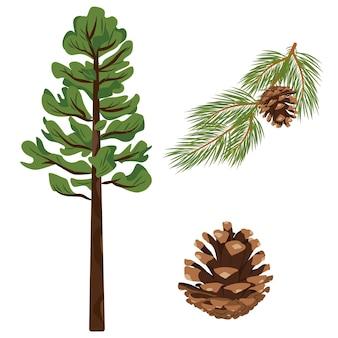 Ensemble de branche d'épinette avec pomme de pin et pomme de pin illustration isolée au format vectoriel