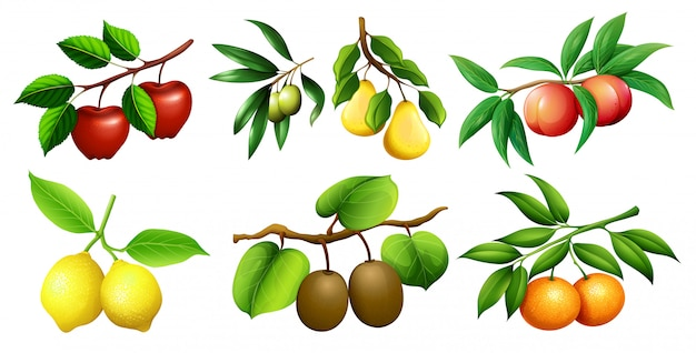 Un ensemble de branche de fruit