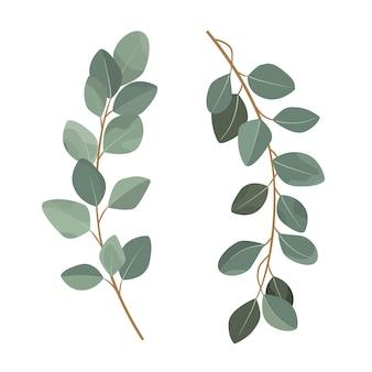 Ensemble de branches d'eucalyptus isolé sur fond blanc.