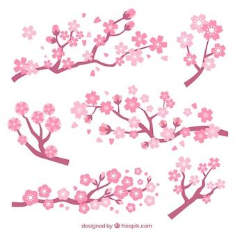 Ensemble de branches avec des fleurs de cerisier