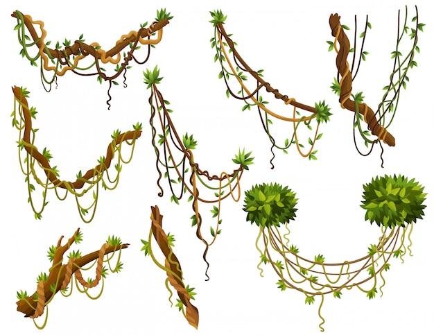 Ensemble de branches de lianes sauvages torsadées.