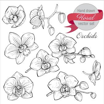 Ensemble de branches d'orchidées dessinées à la main avec des fleurs.