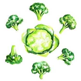Ensemble de brocoli frais. illustration aquarelle dessinée à la main, isolée. illustration vectorielle