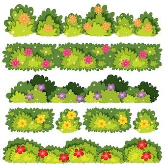Un ensemble de bush de fleurs
