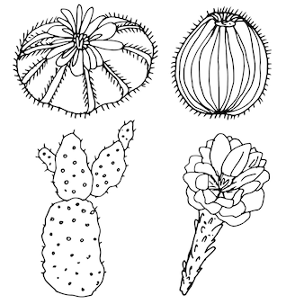 Ensemble de cactus une collection de livres à colorier pour enfants et adultes ensemble d'éléments décoratifs