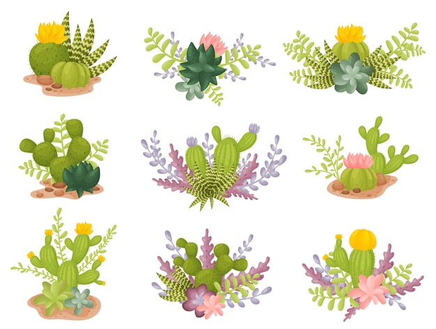 Ensemble de cactus en fleurs de différentes formes
