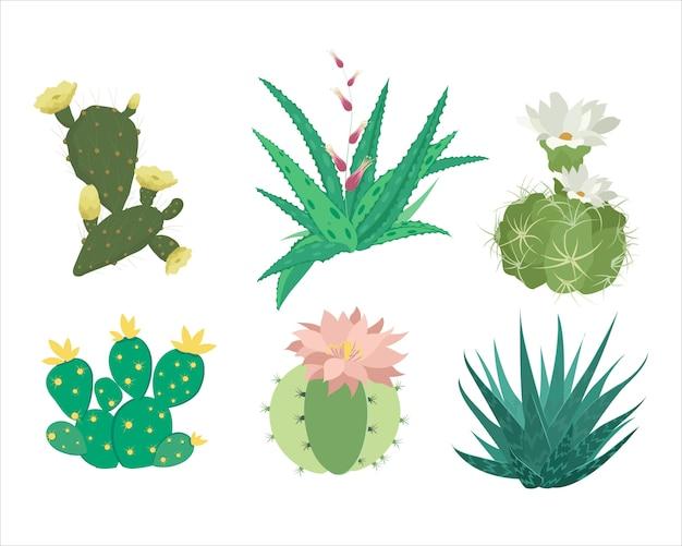 Ensemble de cactus mexicain et aloès