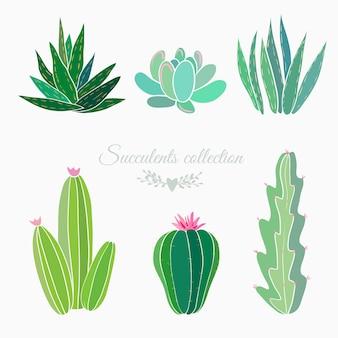 Ensemble de cactus et plantes grasses isolé sur blanc, illustration vectorielle