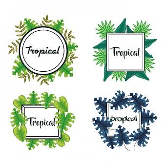 Ensemble de cadres avec feuilles tropicales