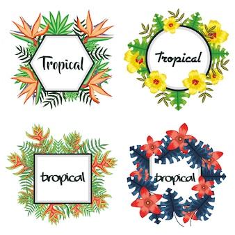 Ensemble de cadres avec des fleurs tropicales et des feuilles