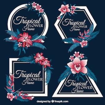 Ensemble de cadres tropicaux anciens avec des fleurs