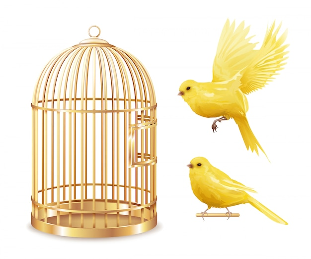 Ensemble de cage d'or des canaries