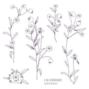Ensemble de canneberges. branches dessinées à la main détaillées avec des baies. illustrations dessinées à la main en noir et blanc.