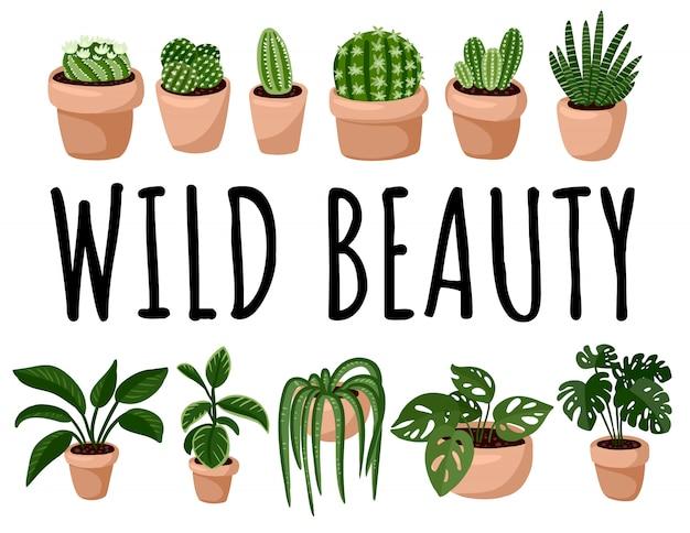 Ensemble de carte postale de plantes succulentes en pot hygge.