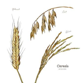 Ensemble de céréales