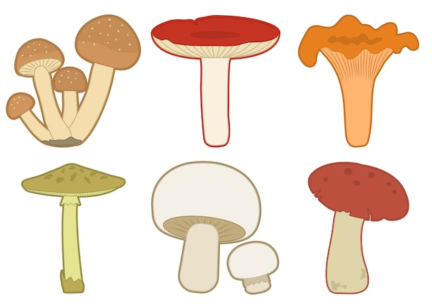 Ensemble de champignons colorés. différents champignons. illustration