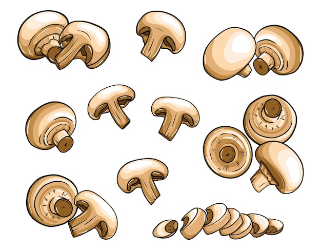 Ensemble de champignons dessinés à la main. différents champignons avec un contour sont isolés