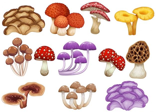 Ensemble de champignons différents