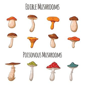 Ensemble de champignons forestiers. collection de champignons comestibles dessinés à la main. champignon blanc, russula, cèpes, girolles. illustration vectorielle pour logo, menu, impression, autocollant, design et décoration. vecteur premium