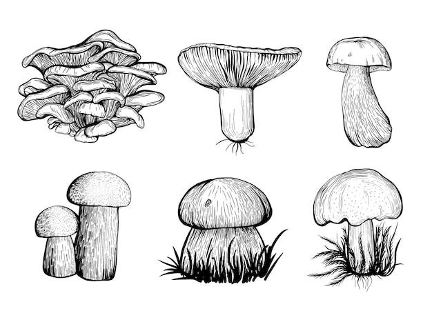 Ensemble de champignons forestiers. illustration vectorielle