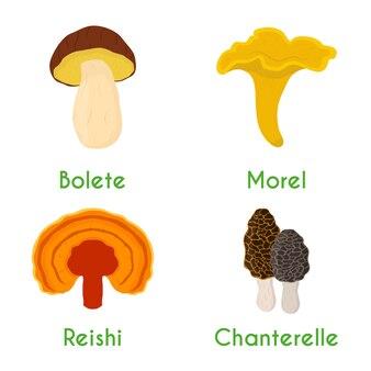 Ensemble de champignons