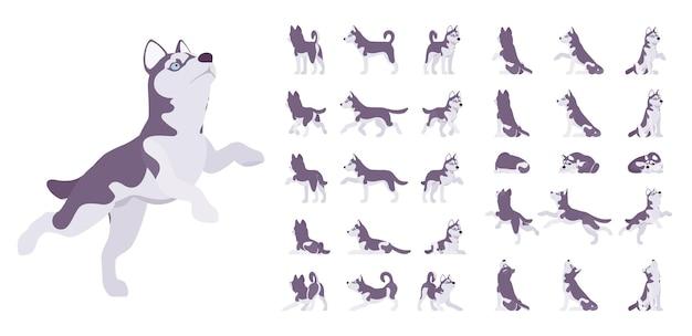 Ensemble de chien husky