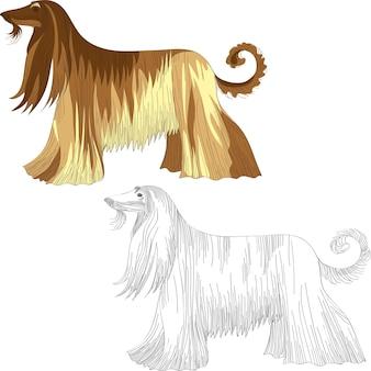 Ensemble chien lévrier afghan race