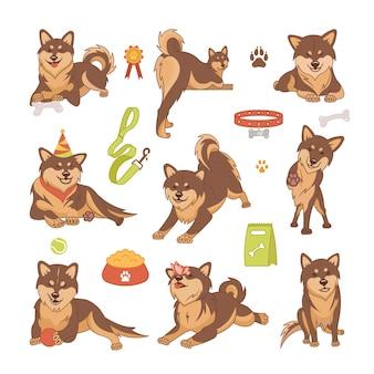 Ensemble de chiens shiba inu