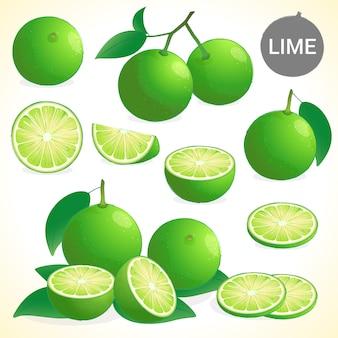 Ensemble de citron vert au format vectoriel de différents styles
