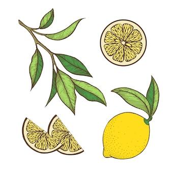 Ensemble de citron.