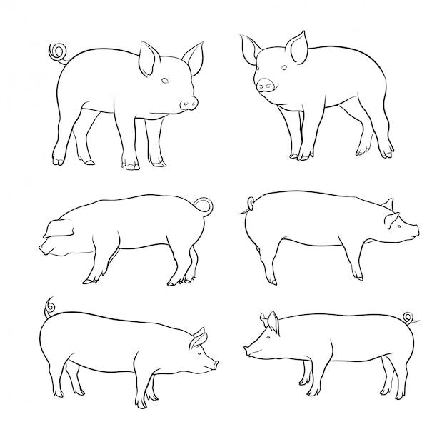 Ensemble de cochon dessiné à la main