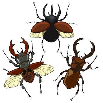 Ensemble de coléoptère de cerf et de scarabée rhinocéros isoler sur fond blanc.