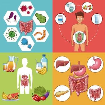 Ensemble de collection de cartes du système digestif