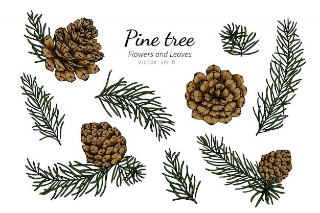 Ensemble de collection de cônes de pin et feuilles dessin illustration.