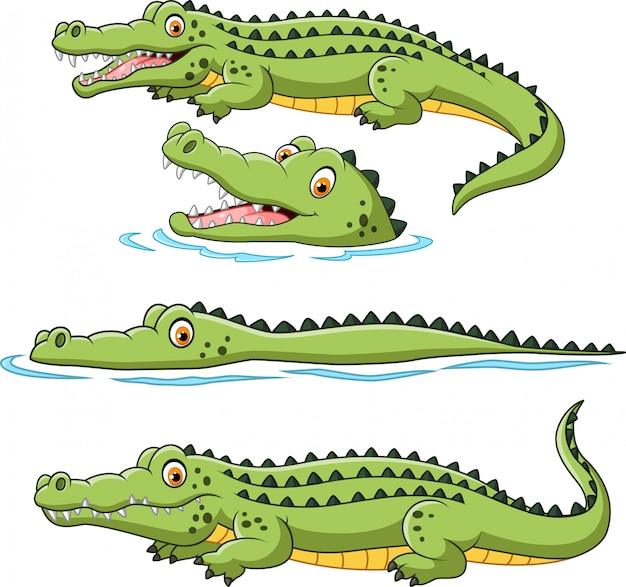 Ensemble de collection de crocodiles