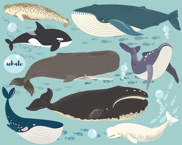 Ensemble de collection d'espèces d'animaux marins