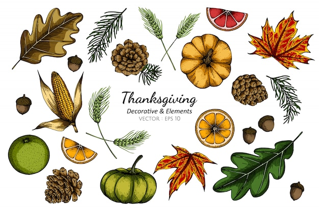 Ensemble de collection de fleur décorative de thanksgiving et feuilles dessin illustration.