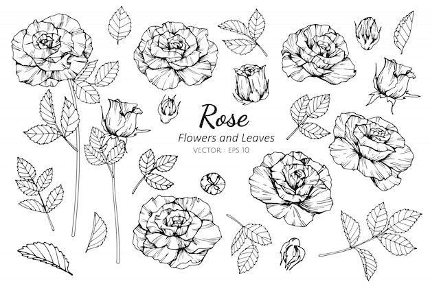 Ensemble de collection de fleur rose et feuilles dessin illustration.