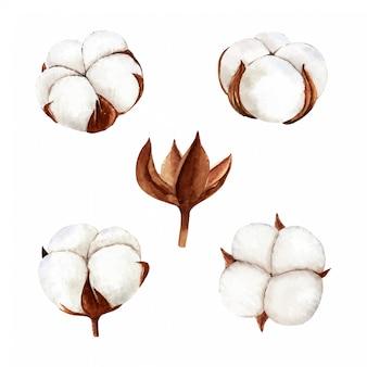 Ensemble de collection de fleurs de coton aquarelle dessinés à la main. peinture aquarelle isolée sur fond blanc, parfaite pour un projet de bricolage