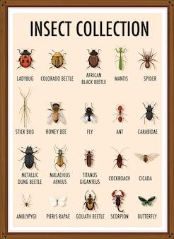 Ensemble de collection d'insectes dans un cadre en bois