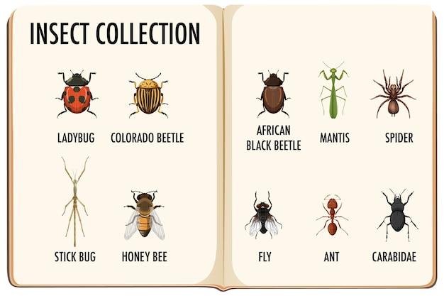 Ensemble de collection d'insectes dans le livre
