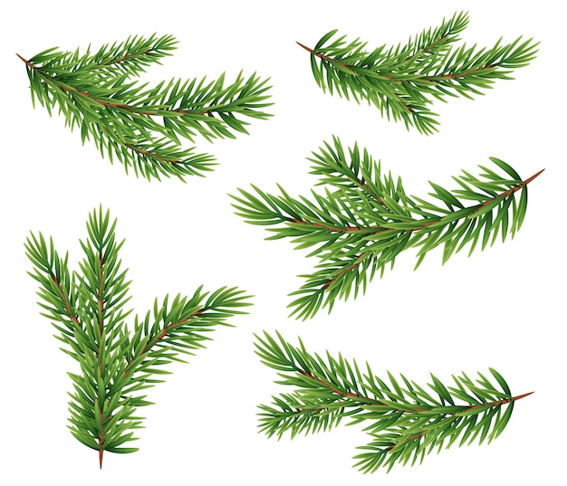 Ensemble de collection de silhouette de branches de sapin réaliste pour arbre de noël, pin.