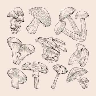 Ensemble de collections de champignons dessinés à la main
